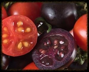purple tomatoes essex