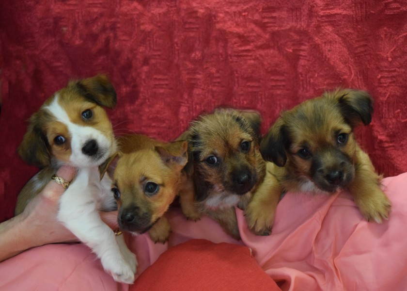 puppy-love-amour-valentino-romeo-juliet
