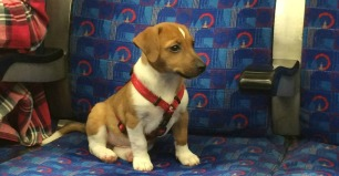 Seeing a dog on the tube is the best thing ever. Nothing makes the day super amazing like getting to see and pet a doggy on the tube. You'll usually see them being given attention while the exasperated owner just tries to go about their day.